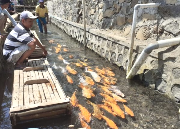 Wisata Kampung Ikan Kluncing Banyuwangi.
