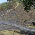 Apresan cinco personas por tala y quema de árboles en San Juan