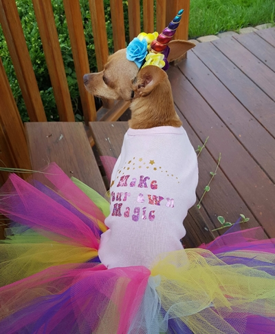 Unicorn Costume for Small and Large Dogs