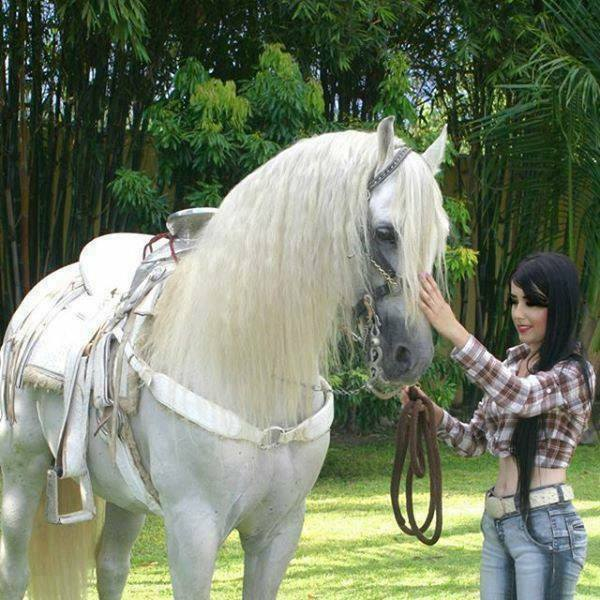 Caballo blanco con su chica