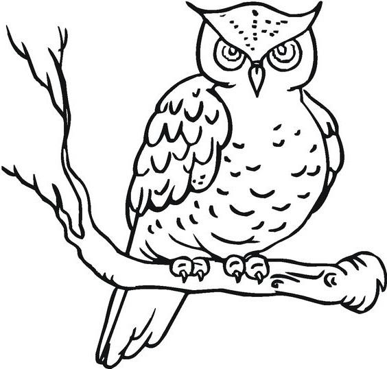 Gambar sketsa burung hantu mudah digambar