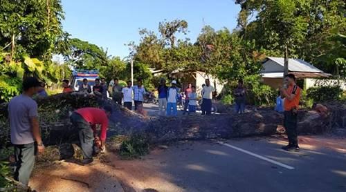 Tim TRC BPBD Padang Bersihkan Pohon Tumbang
