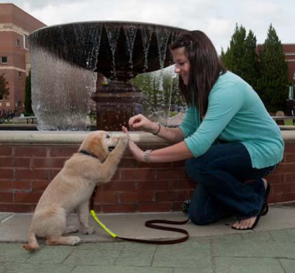 guide dog training ~ house training a senior dog