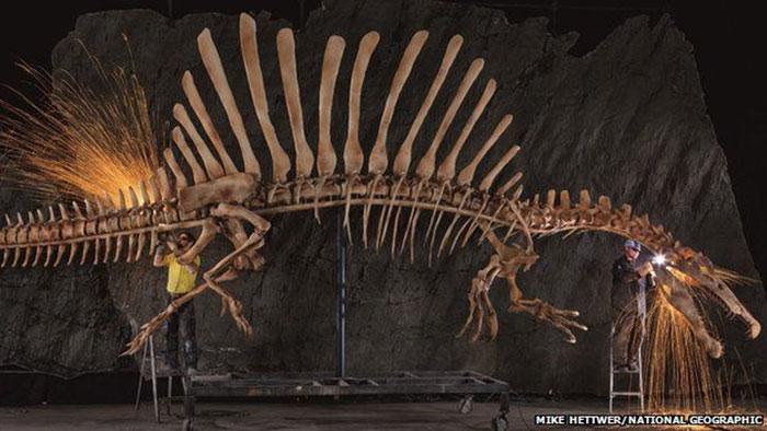 Spinosaurus ditemukan di gurun sahara