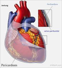 Obat Perikarditis Herbal