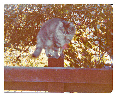 Vintage photo of a grey cat on a fence in 1977 at 1776 Sweetwood Drive in Broadmoor, California