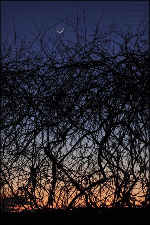 fotografia,naturaleza,luna_nueva,fuente_alamo,limites