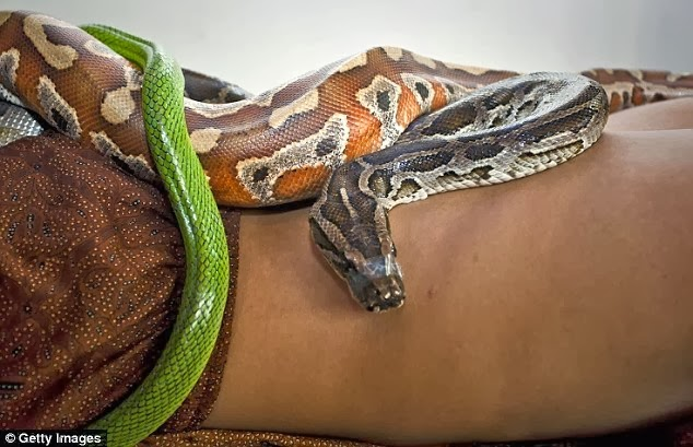 indonesian snake massage