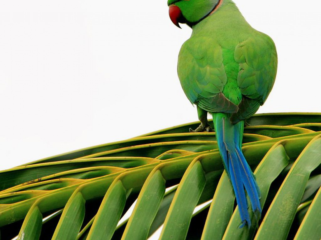 Letest Colorful Parrot HD Desktop Wallpaper Background