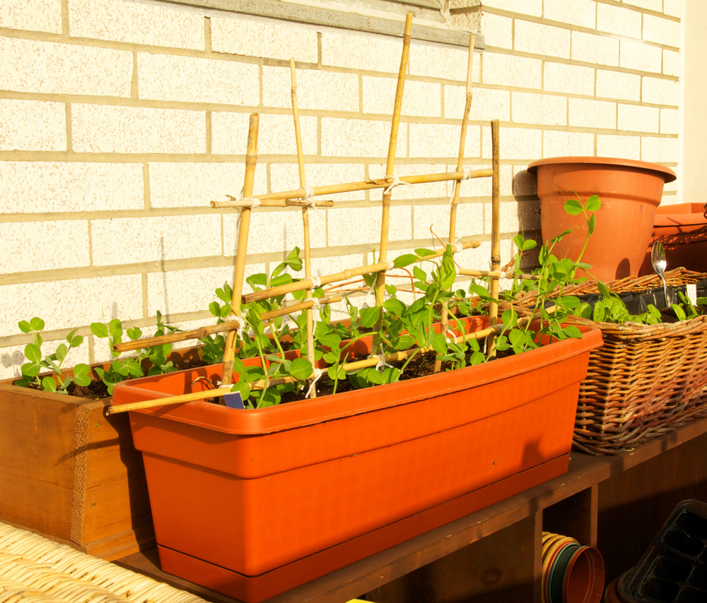 Toronto Balcony Gardening: Making a Trellis from Old ...