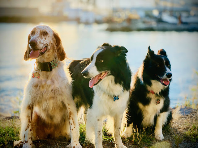 Aislinn Hunter's three dogs, and her book The Certainties