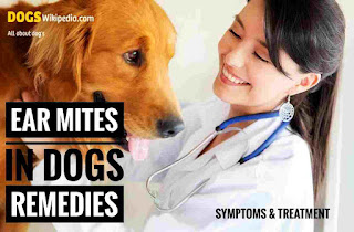 Treatment for dogs mites, solution for dog mites, how to protect my dog from ear mites