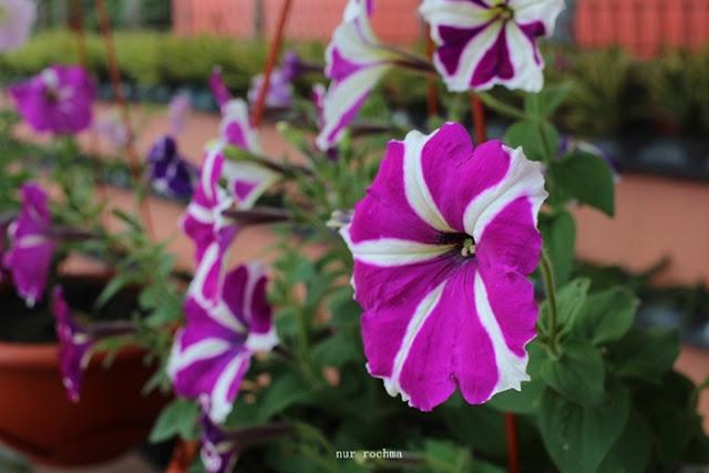 Bukit Flora