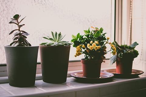 Jenis-Jenis Tanaman Hias Untuk Indoor maupun Outdoor