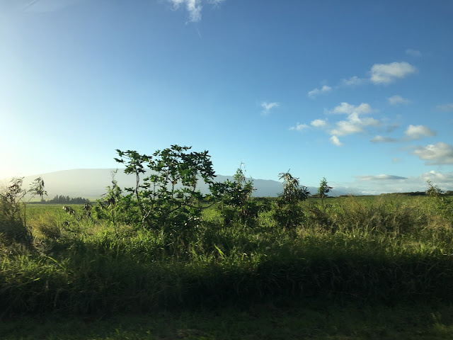 Beginning the Road to Hana tour