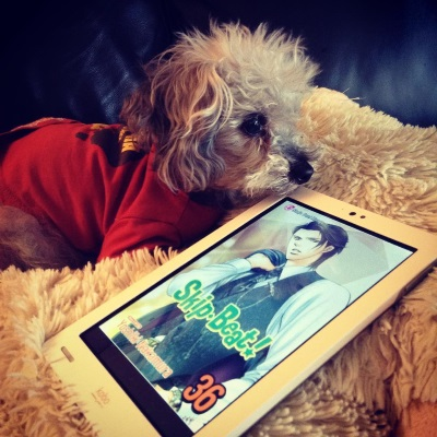 A fuzzy grey poodle, Murchie, lays on a sheep-shaped pillow. He wears an orange t-shirt with the continent of Australia printed in brown on the back, and his chin rests slightly above a white Kobo with Skip Beat Volume 36's cover on its screen. The cover features a young Japanese man wearing a grey three-piece suit with the jacket slung over his shoulder.