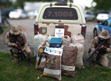 Esplanada: Polícia Militar encontra maconha enterrada em sacos de linhagem