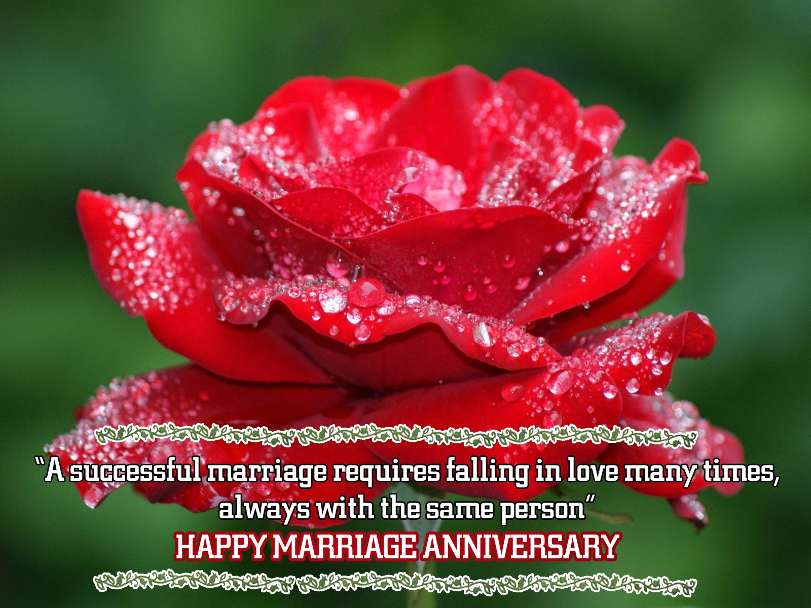Cute Roses Wallpapers With Wordings Successful Marriage Wishes Anniversary Greetings Pics