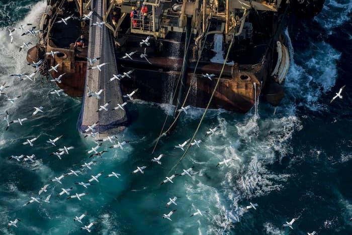 Seaspiracy: ใครทำร้ายทะเล - สารคดีสะท้อนอุตสาหกรรมการประมงที่ข้อมูลบางอย่างอาจยังไม่อัพเดต