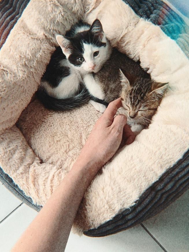 adotar gatos irlanda, adotar pets irlanda, adotar pets dublin