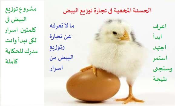 مشروع توزيع البيض فى اربعة خطوات