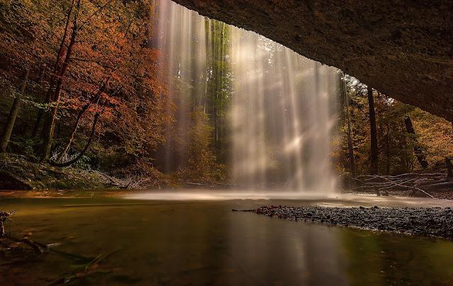 drzewa, las, jezioro, smugi światła