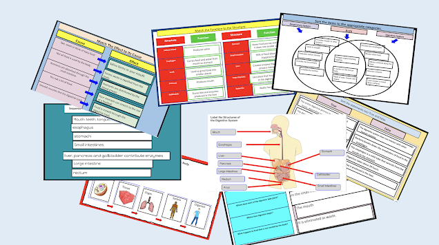 Human Systems and Digestive System
