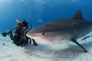 Eli Roth diving beside a shark
