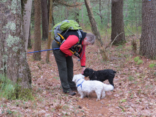 hiker with two dogs