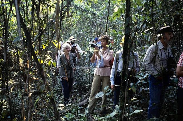 Bất chấp những bí ẩn còn tồn tại bên trong khu rừng, nhiều tour du lịch khám phá Amazon vẫn được tổ chức và thu hút khách tham dự. Giá một tour 2-4 ngày dao động khoảng 200 USD. Khi mua tour này, bạn sẽ được trải nghiệm cảm giác thám hiểm khu rừng đầy bí ẩn với hướng dẫn viên chuyên nghiệp. Thăm thú, tìm hiểu về cá sấu cũng như các sinh vật trong rừng cũng là điều khiến nhiều người thích thú.