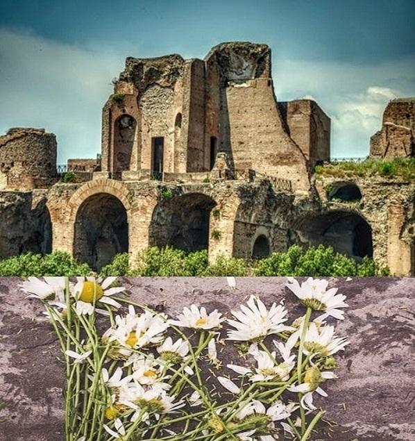 崩壊した古代遺跡と無残に捨てられたデイジー