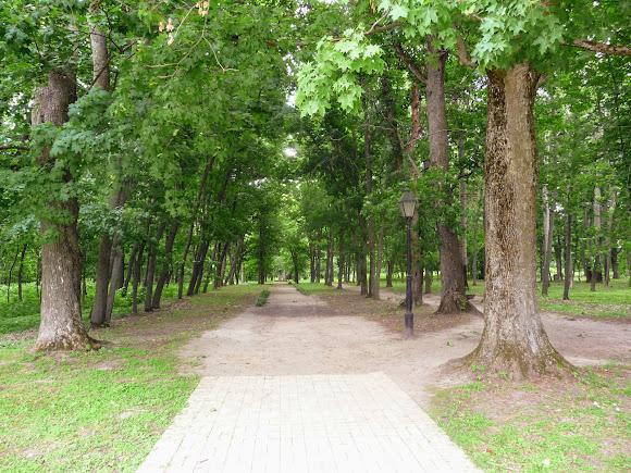 Батурин. Парк Кочубея с вековыми дубами