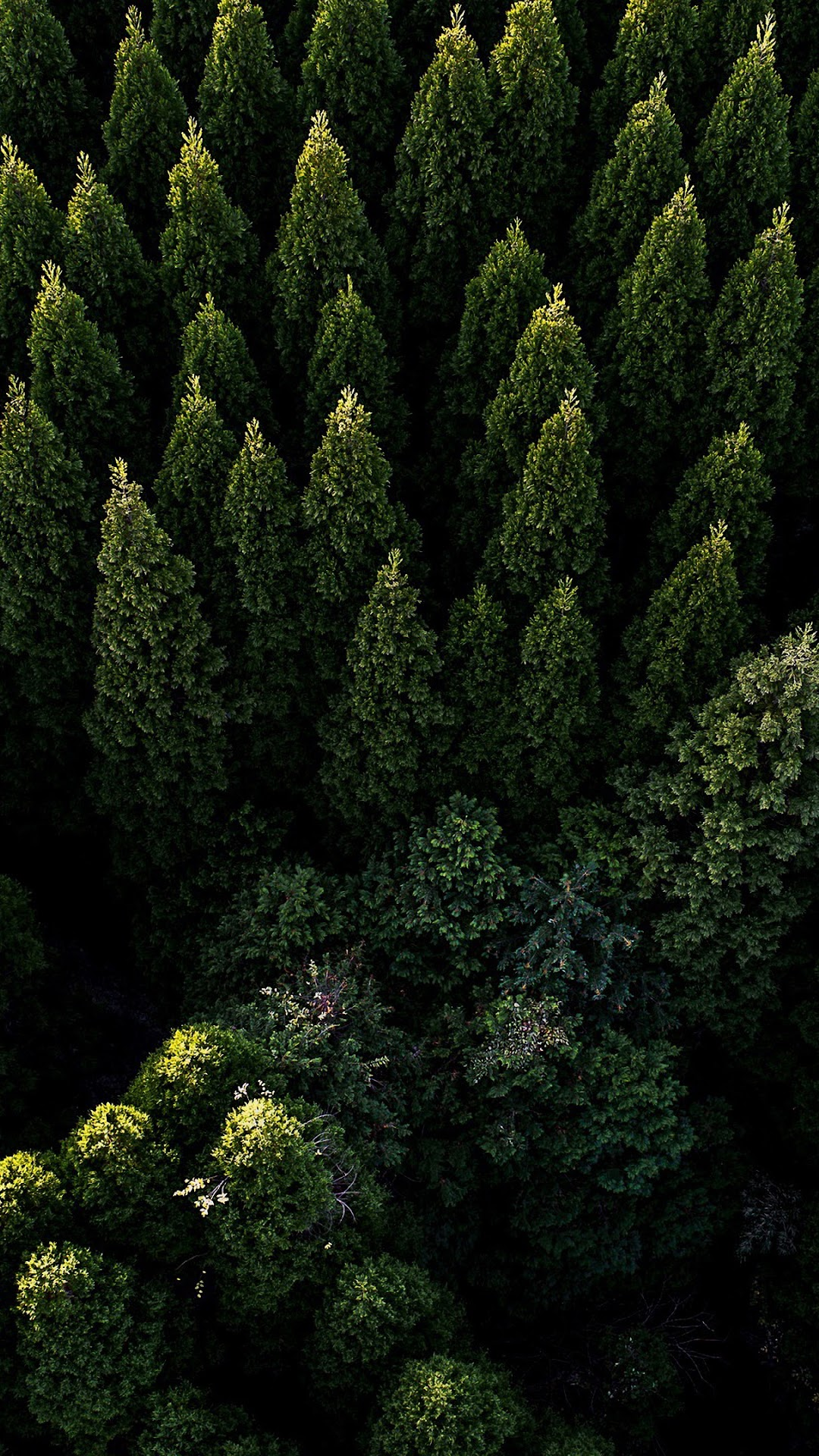 Forest Nature Aerial View Scenery 4k Wallpaper 106