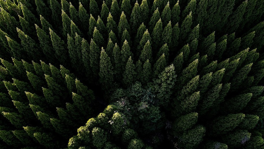 forest nature aerial view scenery 4K 106