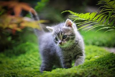 Furry pet companion
