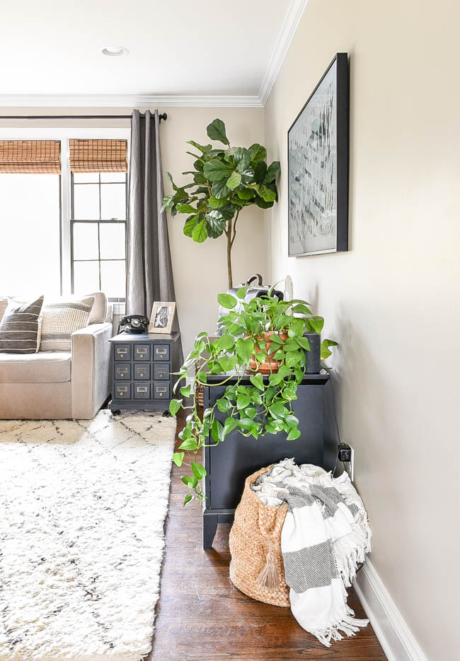 Add house plants