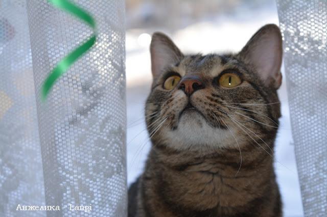 """Фотопроект """"Просто кот"""""""