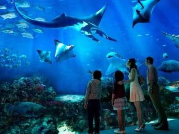 harga tiket sea aquarium
