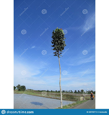 indonesian-nature-weather-sunny-decorated-blue-skies-white-clouds-location-subang-subang-regency-205785713