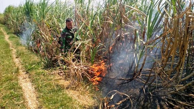 Kembali Api Melahap Lahan Perkebunan