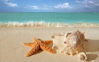صور بحار رائعة اجمل خلفيات بحار مع كائنات بحرية قواقع ونجمة البحر