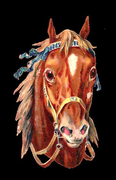 Antique Free Horse Clip Art 2 Portraits