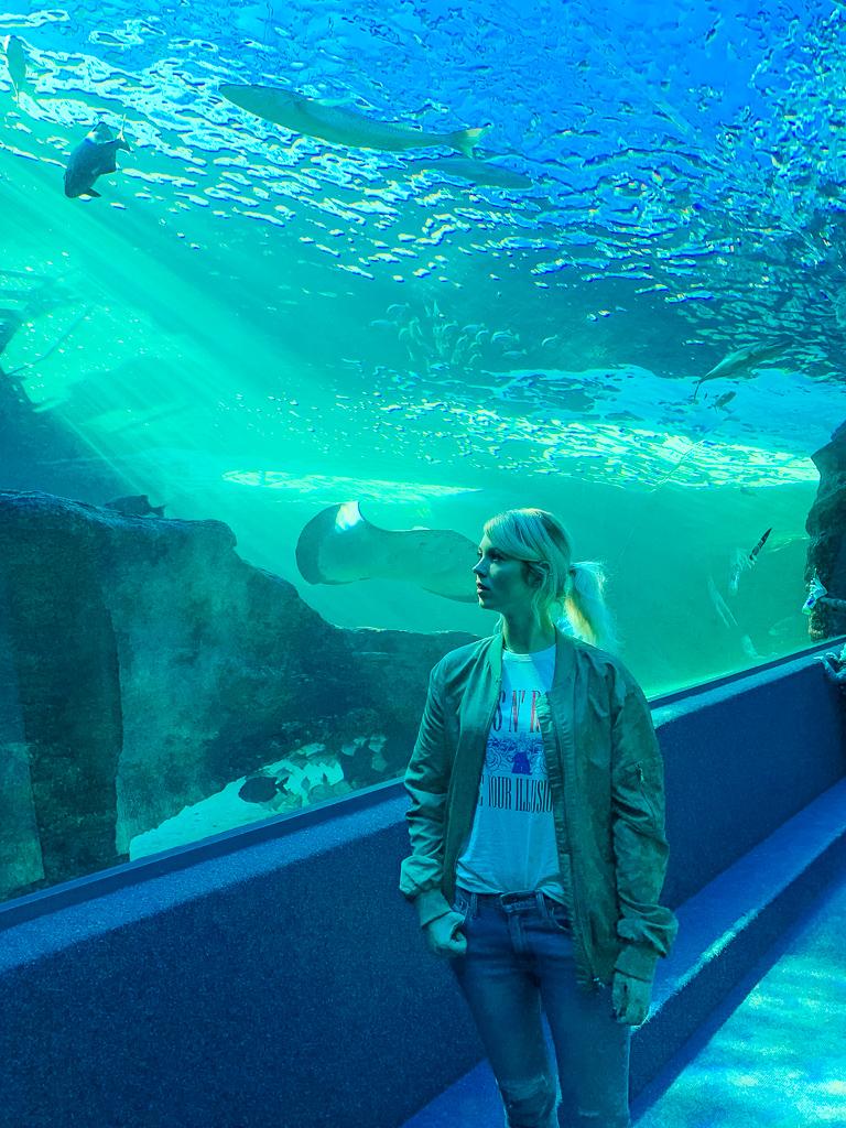 aquarium cape town