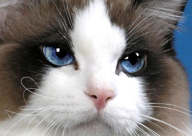 rainbow kitten surprise review