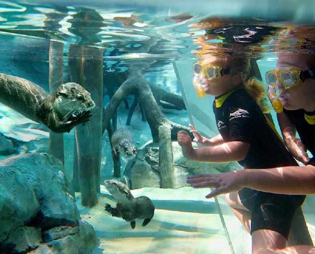 Discovery Cove em Orlando
