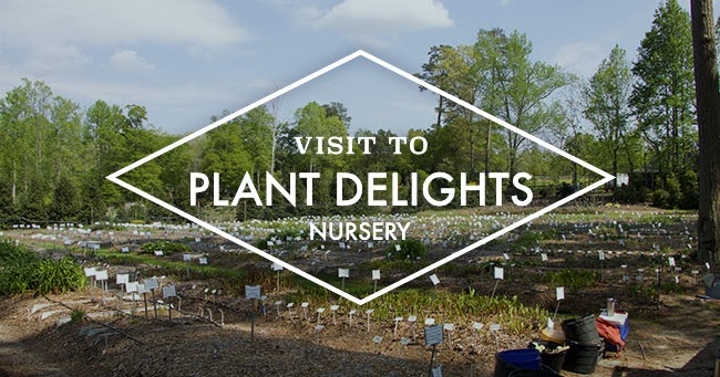Growing With Plants A Visit To Plant Delights Nursery