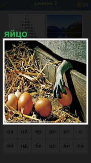 лежат яйца на сене и рука через ограждение пытается одно взять