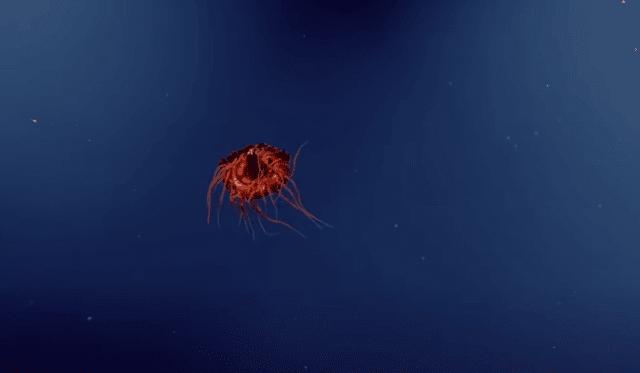 أتولا قنديل البحر