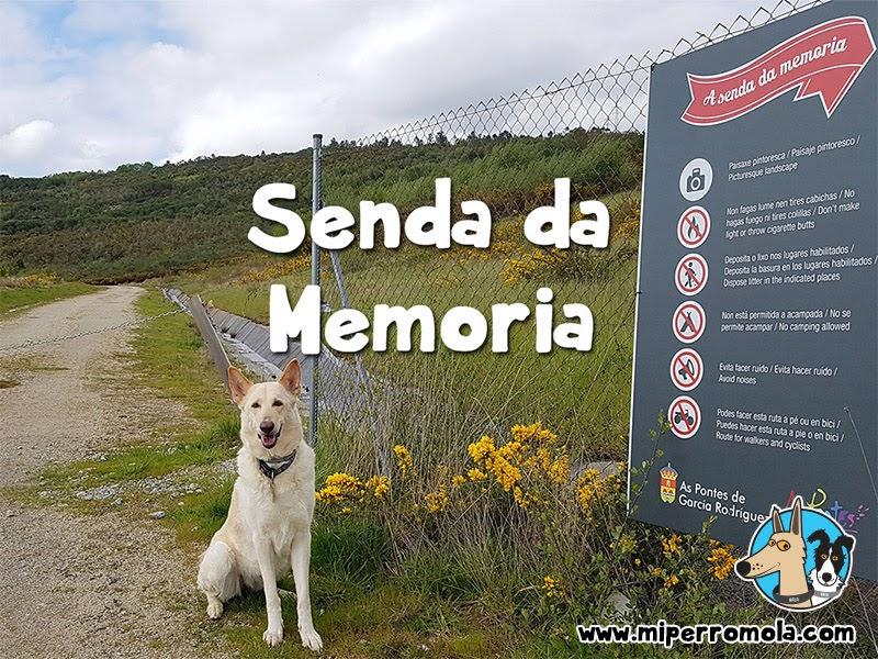 Can de Palleiro en la ruta Senda Da Memoria – Lago de As Pontes