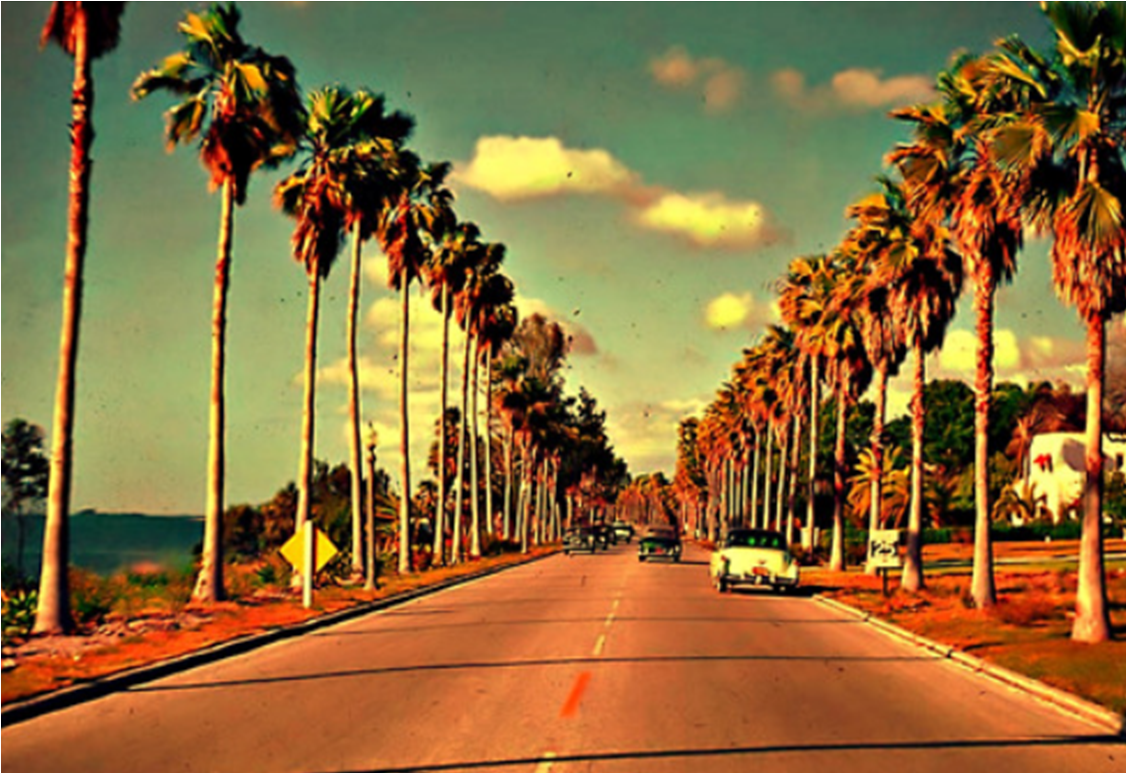 Tumblr Photography California Palm Trees Desktop Wallpaper